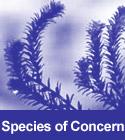 Species of Concern
